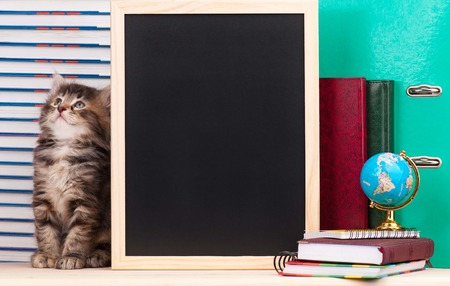 Cute little  kitten with school accessories and black blank board for your text