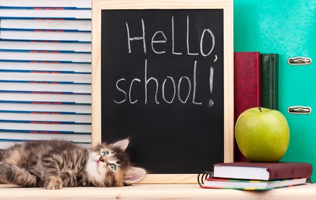 Cute little  kitten with school accessories is ready to go to school