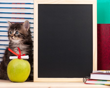 Cute siberian kitten with a diploma and blank board for notes over school accessories background
