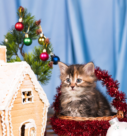 Foto de Cute kitten near gingerbread lodge with Christmas gifts and toys over blue background - Imagen libre de derechos