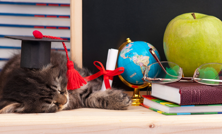 Tired little kitten with school accessories waits for vacation