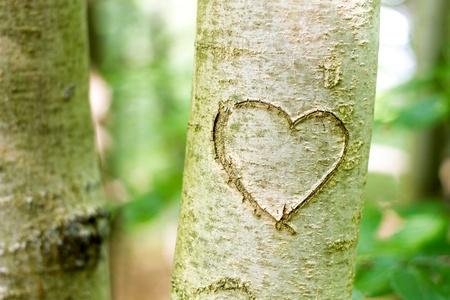 Foto de heart shape carved on tree - Imagen libre de derechos