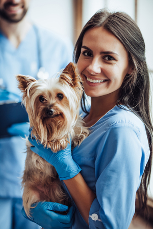 Photo pour Handsome doctor veterinarian and his attractive assistant at vet clinic are examining little dog Yorkshire Terrier, smiling and looking at camera. - image libre de droit