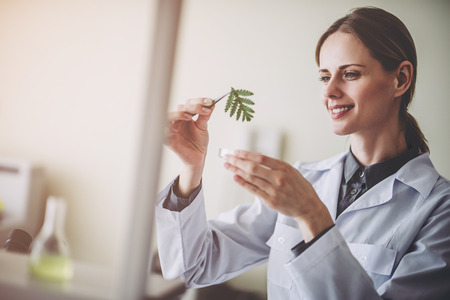 Foto de Experienced female scientist is working in laboratory. Doing investigations with leaves and Petri dish. Making biological discovering. Genetic engineering. Biochemistry, biotechnology, cloning. - Imagen libre de derechos