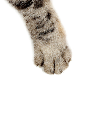 Photo for Cat paw on the white background - Royalty Free Image