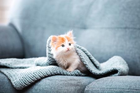 Photo pour Cute kitten with scarf sitting on grey sofa - image libre de droit