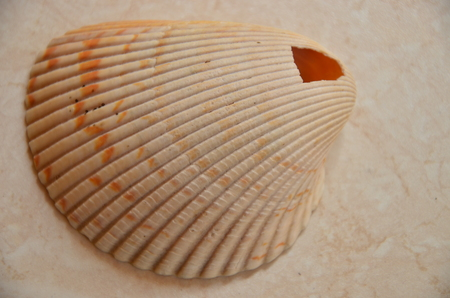 Photo for white shell at the beach background. - Royalty Free Image