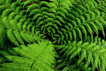 Photo for Center of fern tree in native bush New Zealand - Royalty Free Image