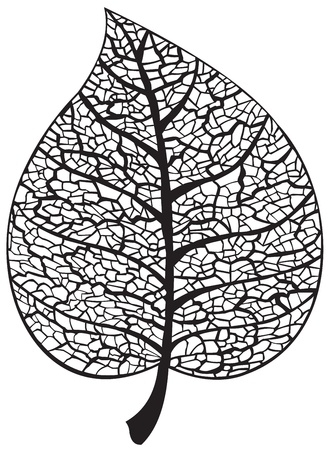 Leaf skeleton silhouette