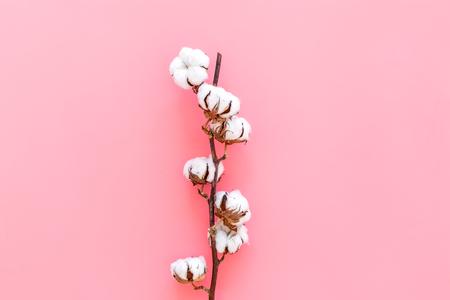 Foto de White dried flowers of cotton on pink background top view copy space - Imagen libre de derechos
