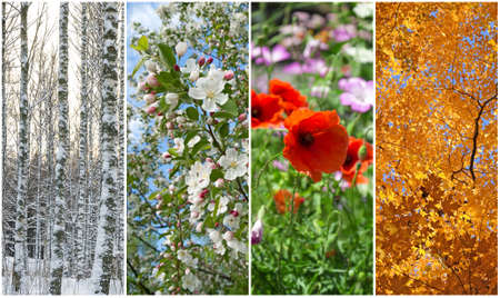Photo for Nature in winter, spring, summer and autumn  Four seasons  - Royalty Free Image