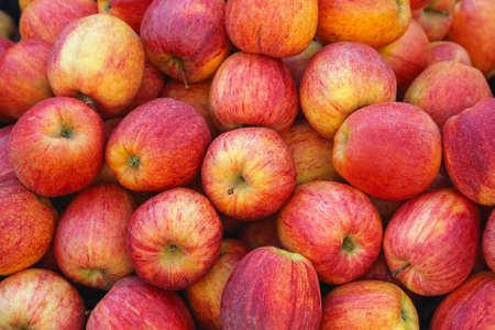 Photo for Big Bunch of Idared Red Apples - Royalty Free Image