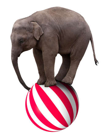 A baby circus elephant balancing on a big ball