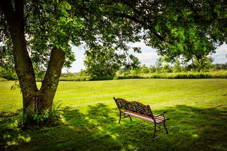 Foto de Bench under lush shady tree in summer park - Imagen libre de derechos