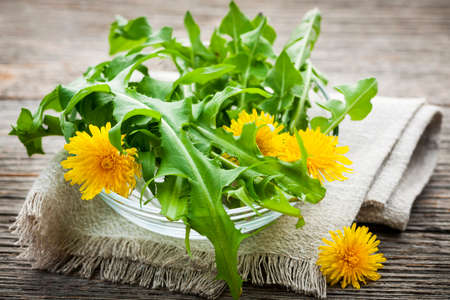 Photo for Foraged edible dandelion flowers and greens in bowl - Royalty Free Image