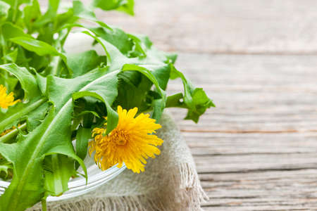 Photo for Foraged edible dandelion flowers and greens in bowl on rustic wood background with copy space - Royalty Free Image