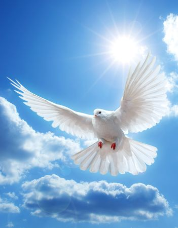 Photo pour Dove in the air with wings wide open in-front of the sun - image libre de droit