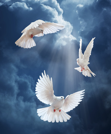Photo for Dove in the air with wings wide open in-front of the sun - Royalty Free Image