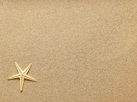 Photo for Starfish on Beach Sand. Close up - Royalty Free Image