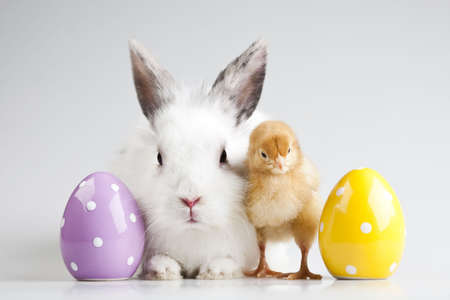 Happy Easter animal