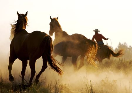 Wild Horses Running through desert
