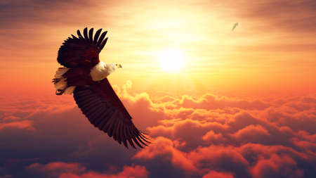 Photo pour African Fish Eagle flying high above the clouds with sunrise Digital artwork - image libre de droit