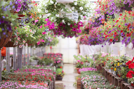 Foto de greenhouse full of colorful flowers - Imagen libre de derechos
