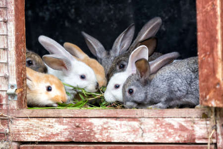 Photo for A group of young rabbits in the hutch - Royalty Free Image