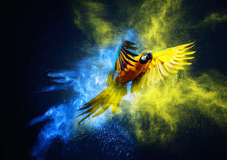 Photo pour Flying Ara parrot over colourful powder explosion - image libre de droit