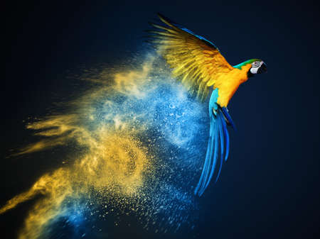 Foto de Flying Ara parrot over colourful powder explosion - Imagen libre de derechos