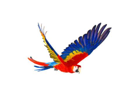Foto de Colourful flying parrot isolated on white - Imagen libre de derechos