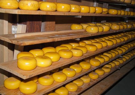 This is Dutch cheese kebbucks in process of natural aging at classic Dutch farm, Netherlands