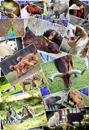 Animal collage with various species