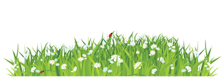 grass and flowers on white background / horizontal / vector
