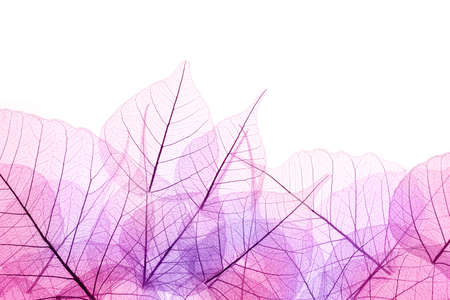 Foto de Pink and Purple Border of transparent Leaves - isolated on white background - Imagen libre de derechos