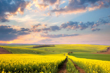 Foto de Yellow flowering fields, ground road and beautiful valley, nature spring landscape - Imagen libre de derechos