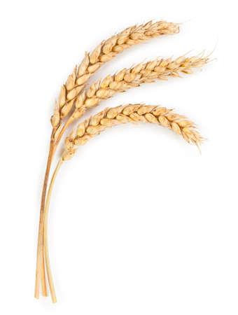 Foto de Ripe ears of wheat isolated on white background - Imagen libre de derechos