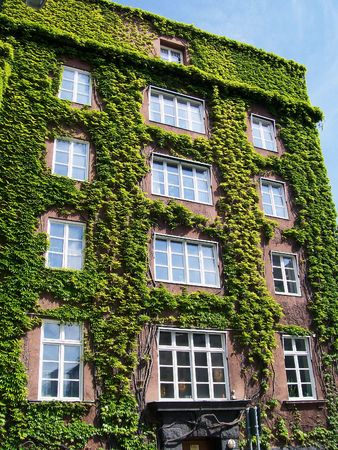 Ivy covered building in the old town centre of Malmo.