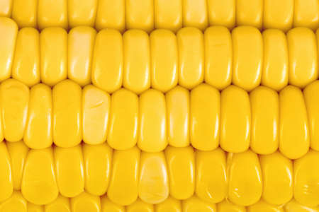 Foto de Ear of corn - food background - Imagen libre de derechos