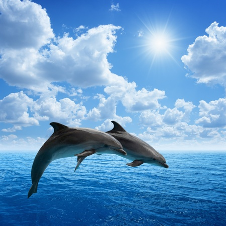 Photo pour Dolphins jumping, blue sea and sky, white clouds, bright sun - image libre de droit