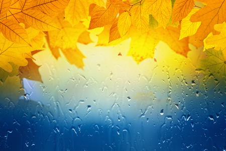 Autumn background - maple and oak leaves, window glass with rain drops, rainy day, season is fall