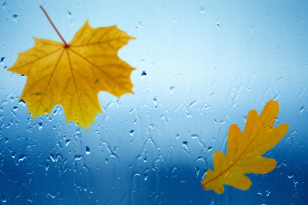 Autumn background - maple and oak leaves falls outside window with rain drops, rainy day; fall depression