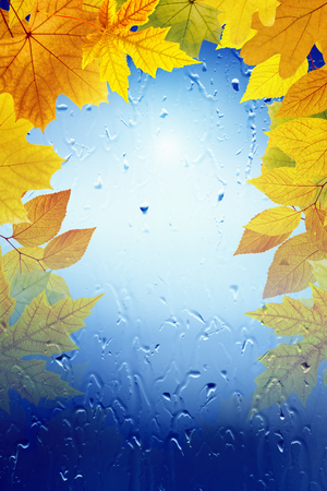 Autumn background - falling maple leaves, window with rain drops, rainy day, season is fall, vertical picture for smartphone