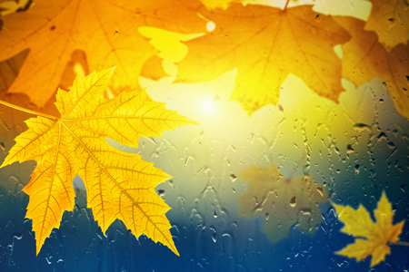 Autumn background - maple leaves outside window glass with rain drops, rainy day, season is fall