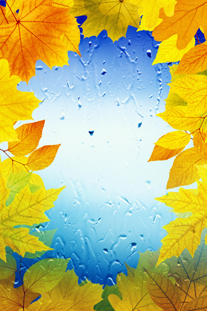Maple leaves, window with rain drops, rainy day, season is fall