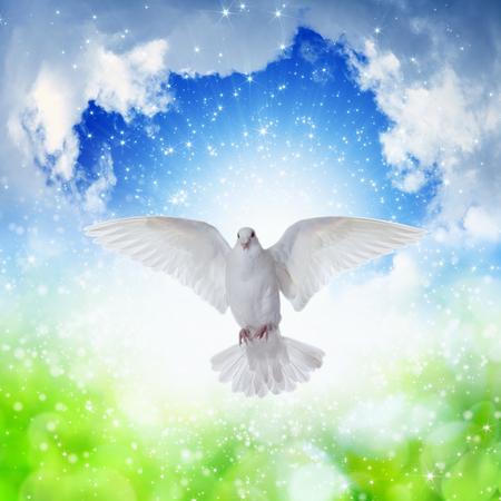 Photo for Holy Spirit came down like white dove, holy spirit dove flies in blue sky, bright light shines from heaven, gospel story - Royalty Free Image