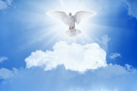 Photo for Holy spirit bird - white dove flies in blue sky, bright light shines from heaven - Royalty Free Image