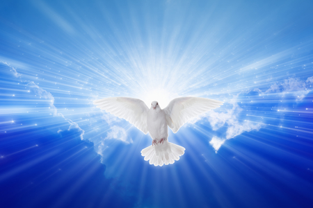 Photo for Holy Spirit came down like dove, holy spirit dove flies in blue sky, bright light shines from heaven, christian symbol, gospel story - Royalty Free Image