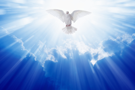 Photo for Holy spirit dove flies in blue sky, bright light shines from heaven, christian symbol - Royalty Free Image