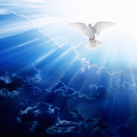 Photo for Holy spirit bird flies in blue sky, bright light shines from heaven, flying white dove - Royalty Free Image